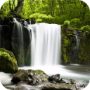 Relax Forest ~ Nature Sounds 5.0.1