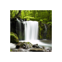 Relax Forest ~ Nature Sounds 5.7.0