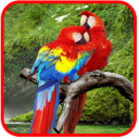 Parrots HD Live Wallpaper 1.0