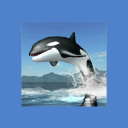 Orca Survival Simulator 1.1