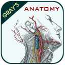 Gray's Anatomy - Atlas 3.5