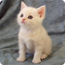 Top 20 Cats and Kittens 1 17.02.14