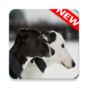 Greyhound Wallpapers 3.0.0