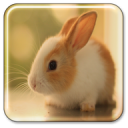Bunny Live Wallpaper 1.9