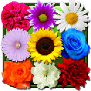 Flowers Live Wallpaper 5.6