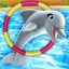 Dolphin Show 3.02.3
