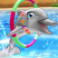 Dolphin Show 3.35.0