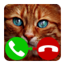 fake call cat 4.0